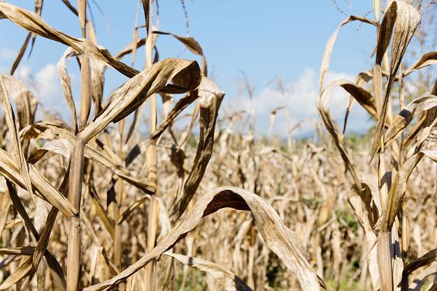 Pomoc  finansowa  dla gospodarstw rolnych i działów specjalnych produkcji rolnej, w których powstały szkody spowodowane przez suszę w 2015 r.