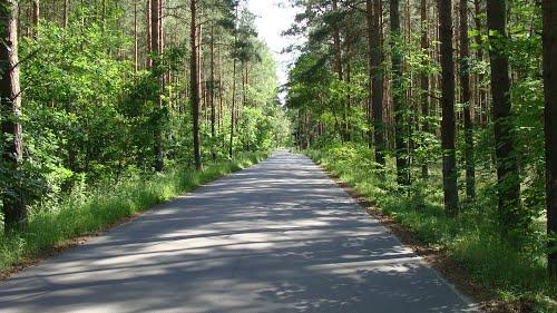 Ogłoszenie o wyłożeniu do publicznego wglądu projektu uproszczonego planu urządzenia lasu