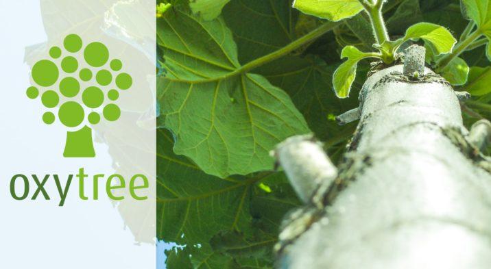Informacja dla rolników – szybkorosnące drzewo tlenowe OXYTREE